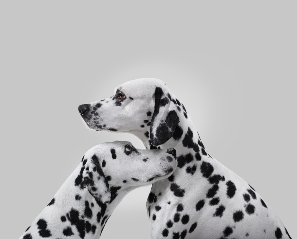 larocheposay_dalmatiens_5hd